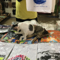 T-shirt shop cat